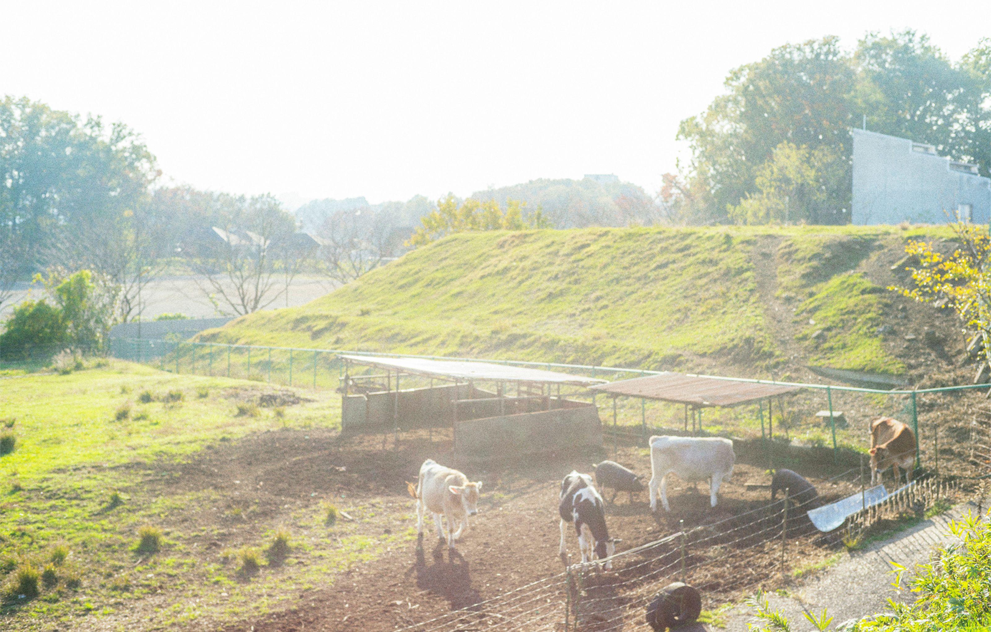 MUKUの農場